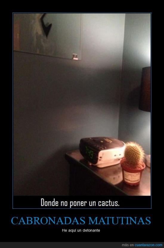 cactus,despertador,mano,pinchar,poner