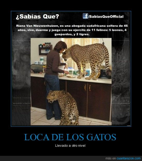 casa,gato,guepardo,leon,leopardo,loca,tigre,vivir