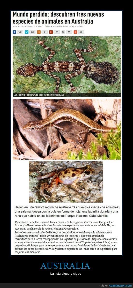 Australia,descubrimientos,especies raras,lagartija,lagartija con cuerpo de serpiente,Nos dominarán los animales australianos,rana,raresas,salamanquesa