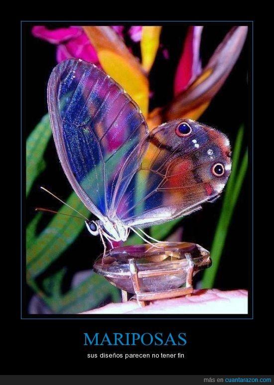 color,curiosa,mariposa,naturaleza,transparente