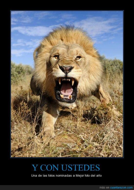 África,cámara go pro. National Geographic,León,mejor foto del año.,natgeo,rugido,Serengueti