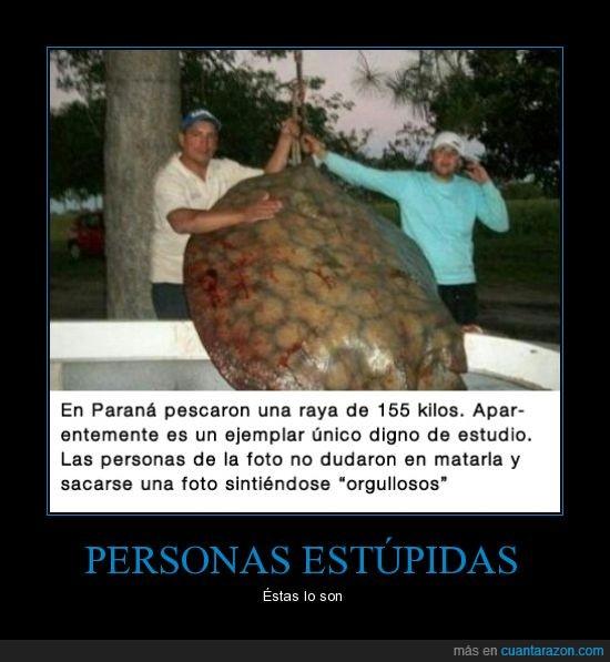 155 kilos,ecologistas,foto,gente estupida,Paraná,pescadores,raya