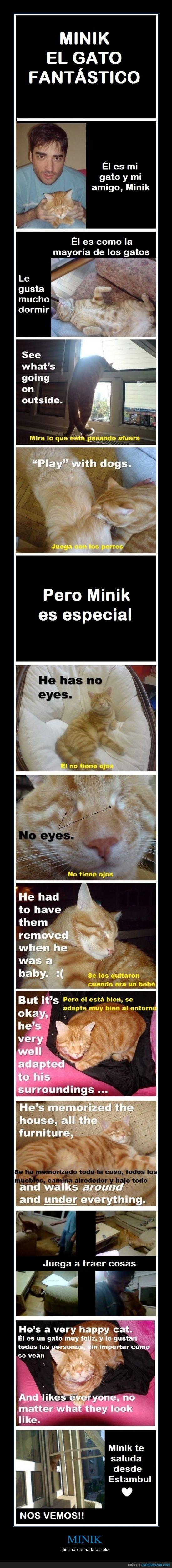 bien por el dueño que la cuida,ciego,fuerte,Malditos quienes le quitaron los ojos,Minik,un gato