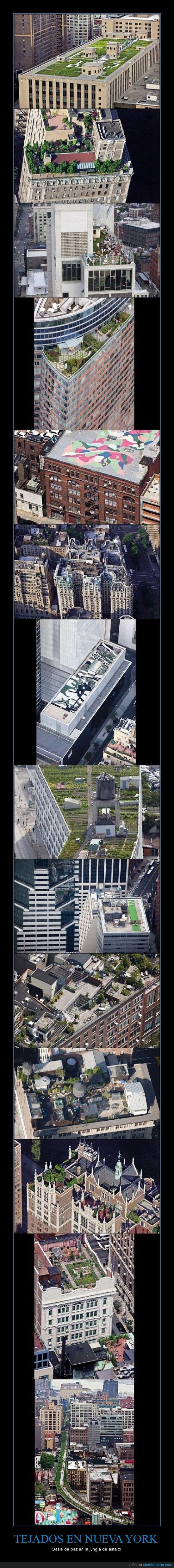 bonito,jardín,jardines,new york,nueva york,NY,oasis,paz,tejados