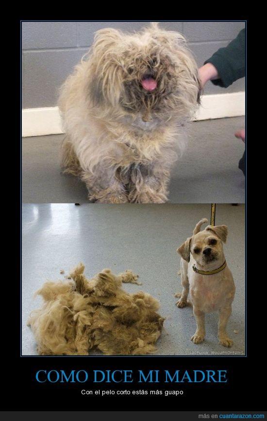 Abandonado,afeitar,cabello,cortar el pelo,madre,perro,rasurar,rescatar