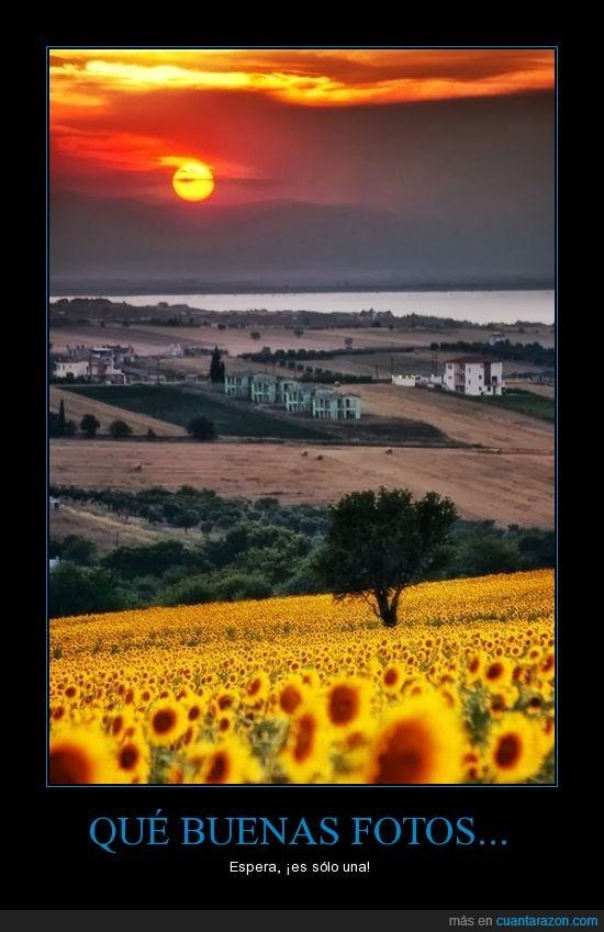 campo,fotografo,fotos,girasol,montaña,sol,una sola