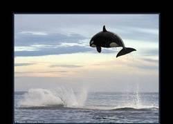 Enlace a ORCA