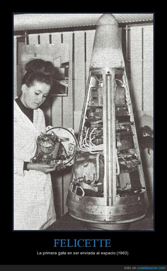 1963,espacio,Felicette,Francia,gata,sobrevivió al viaje