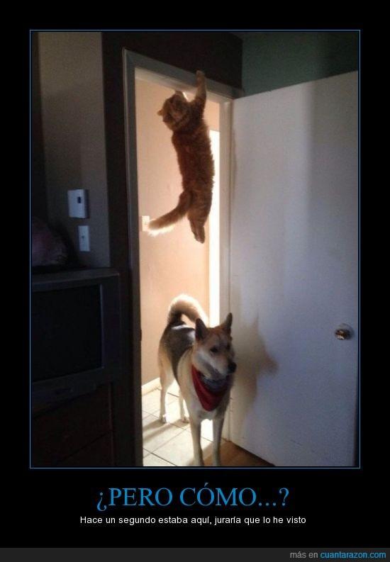 escondite,gato,perro
