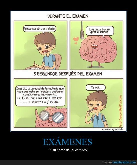aprender,cerebro,estudiar,examenes,listo,palabra,sabio,suicidate