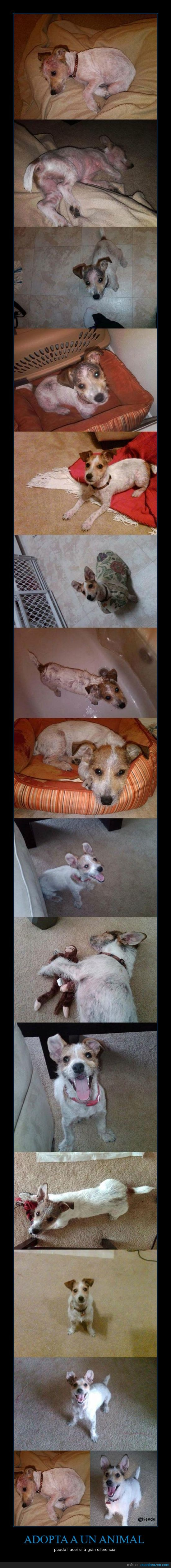 adoptar,animal,diferencia,mascota,pelo,perro,salvar