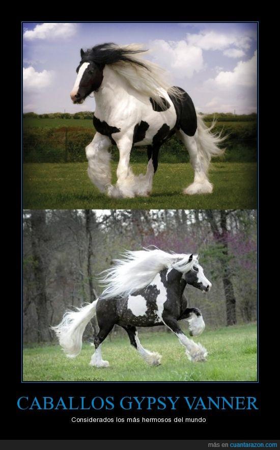 Caballos,Gypsy Vanner,Hermosos,pelazo pantene,unicornios sin cuerno
