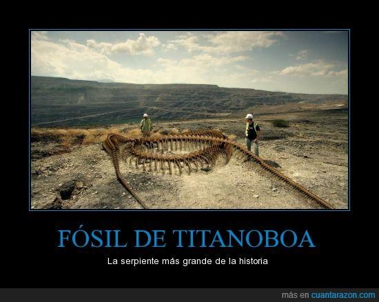 fosil,gigante,huesos,menos mal que se extinguió,serpiente,titanoboa