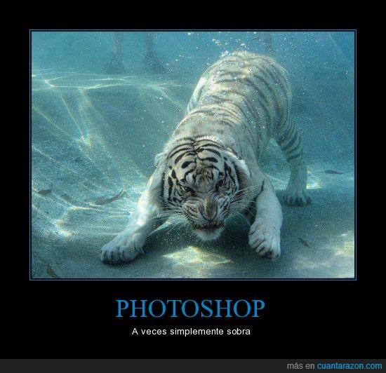 agua,atacar,blanco,felino,nadar,tigre