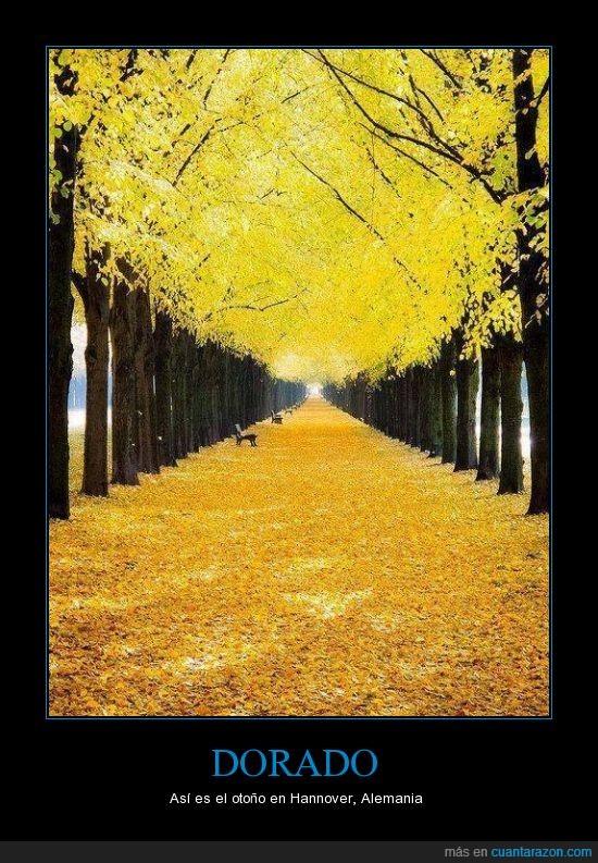 alemania,alfombra,arbol,bonito,dorado,hermoso,hojas,otoño,suelo