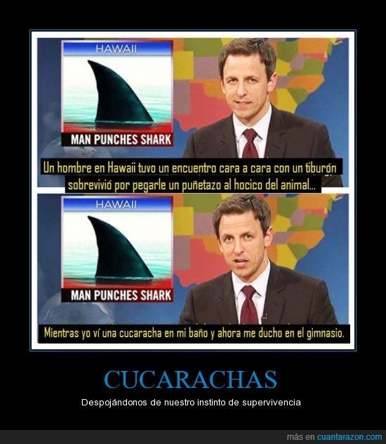 cucaracha,gimnasio,hocico,hombrem hawaii,puñetazo,tiburon