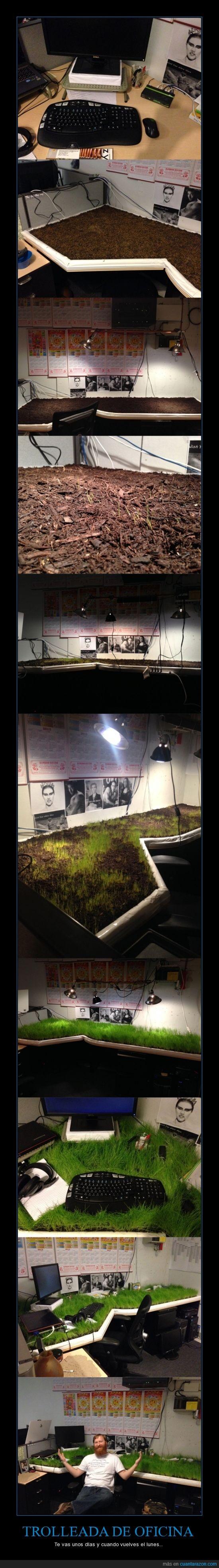 cesped,compañero,crecer,escritorio,hierba,oficina,semilla,tierra,troll,trolleada