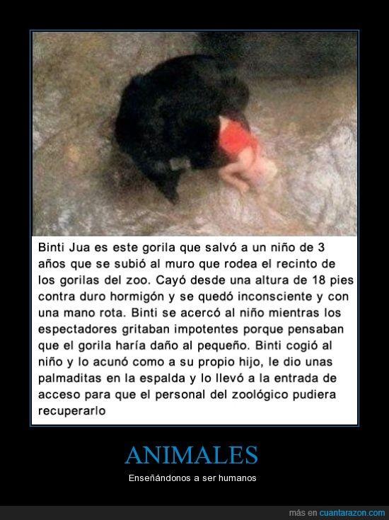 acceso,animales,Bini,Espalda,Gorila,hijo,hormigón,Humanos,joven,mano,Personas,pie,Zoológico