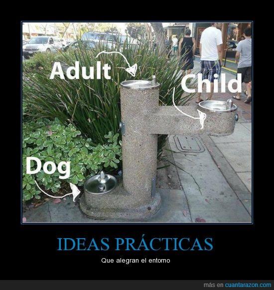 agua,alturas,beber,entorno,fuente,Ideas,mayor,niño,perro,practico