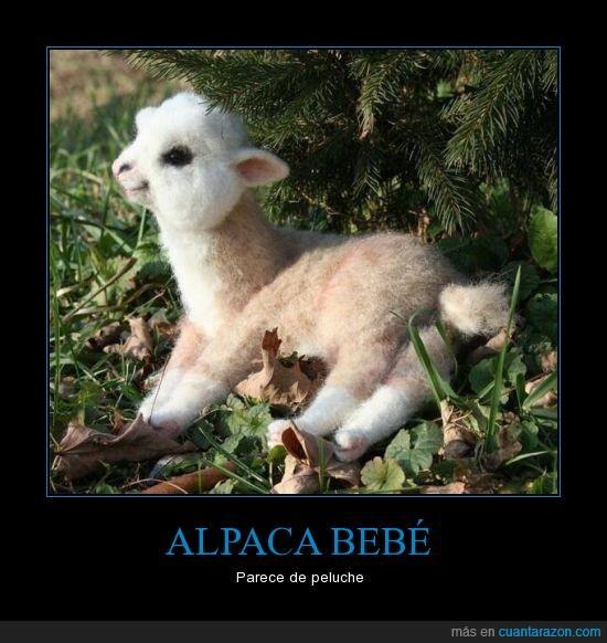 alpaca,bebé,mentira,muñeco,parece,peluche,tierno