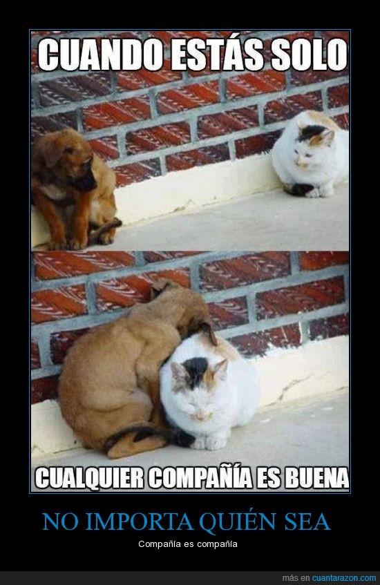 abrazar,acompañado,compañia,frio,gato,perro,solo
