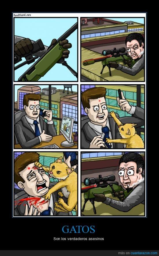 francotirador,gato,laser,luz,matar