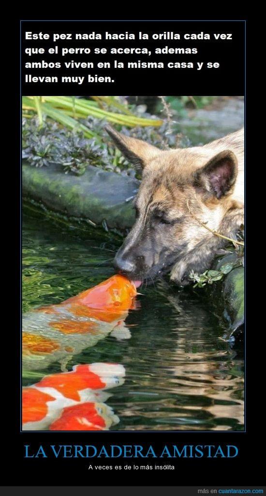 amistad,llevarse bien,perro,pez