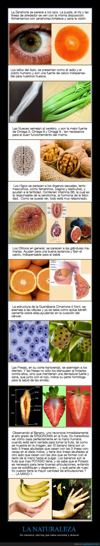 comunicar,fresa,naranja,naturaleza,nueces,platano,zanahoria