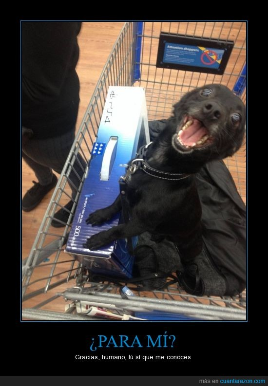 carrito,comprar,feliz,perro,playstation,ps4