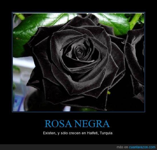 Cuánta Razón Rosa Negra