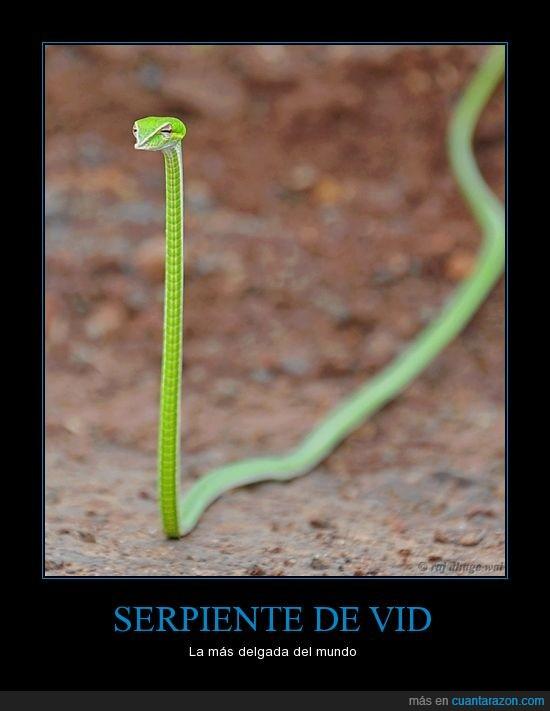 fina,naturaleza,serpiente,verde,vid
