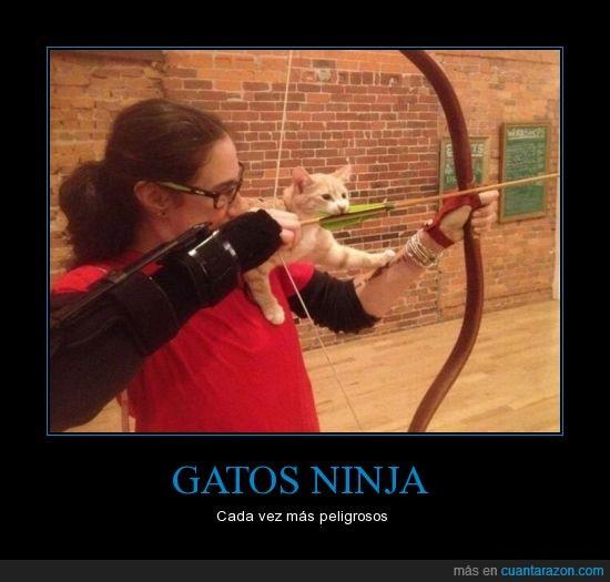arco,atacar,flecha,gato,morder,ninja