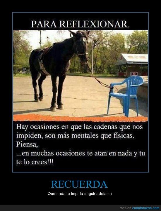 caballo,cadenas,fuerza,personas,poder,que nada te ate,seguir adelante,silla