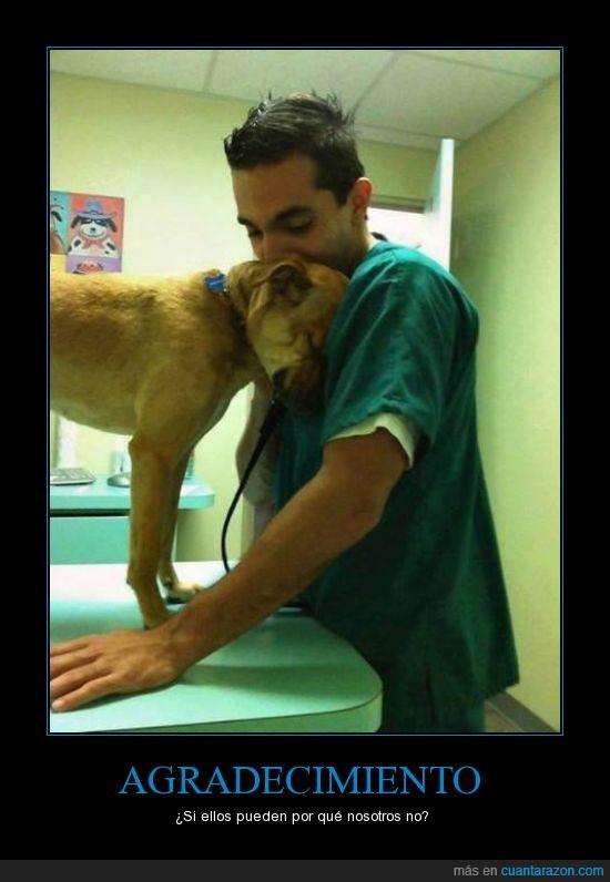 accion,cariño,demostrar,doctor,gracias,perro,veterinario