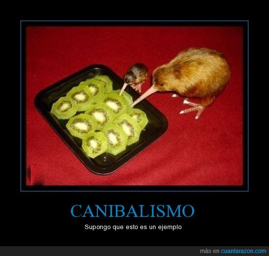 ave,canibales,comer,fruta,kiwi