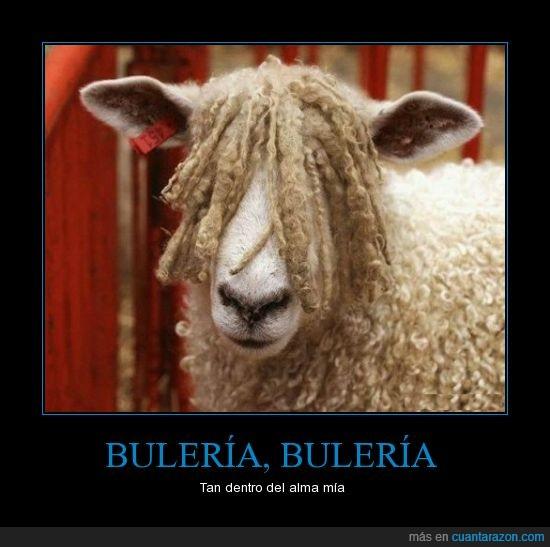 bisbal,lana,oveja,pelo,presidenta del club de fans ovejil,rizos