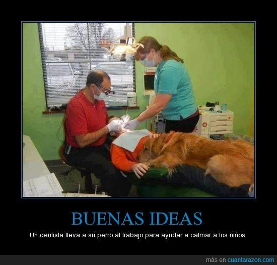 acariciar,ayudar,buenas,Dentista,ideas,mascotas,niños,perro