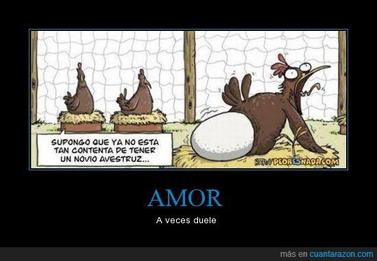 amor,avestruz,desgarro terrible,dolor,gallina,huevo,novio