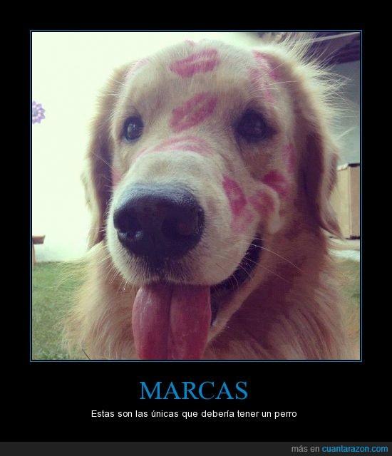 besos,marcas,perro,pintalabios