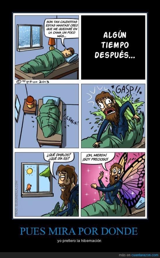 elguindilla,hibernar,mariposa
