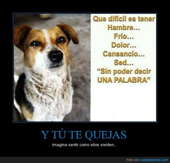 animales,frio,hambre,llorar,no poder decir nada,perro,quejar,reflexion