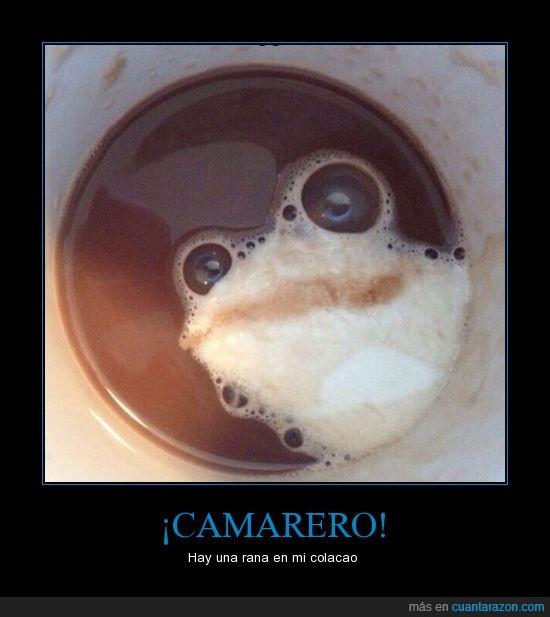 beber,bebida,café,espuma,rana,taza,tomar