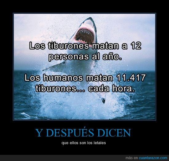animales,asesino,caza,humanidad,mundo de cabeza,paren de matar animales,personas,tiburon