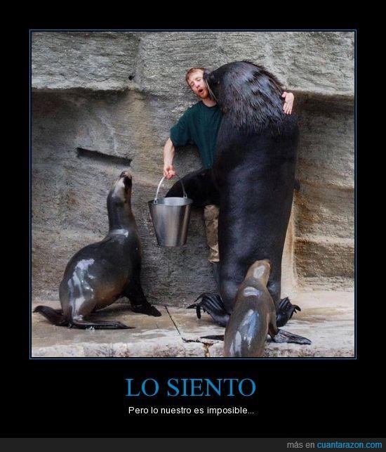 amor,amor imposible,animal,besar,cuidador,foca,leon,marina,pescado,traer