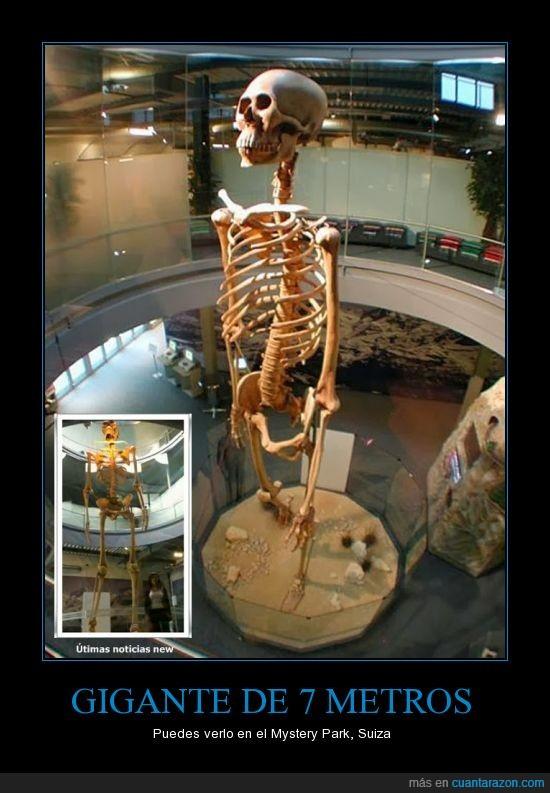 esqueleto,gigante,huesos,misterio,suiza