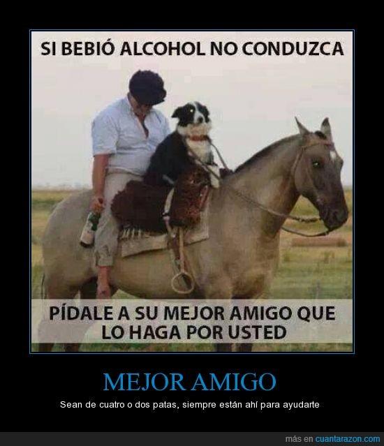 beber,borracho. ayuda,caballo,conducir,conductor sobrio,perro,riendas
