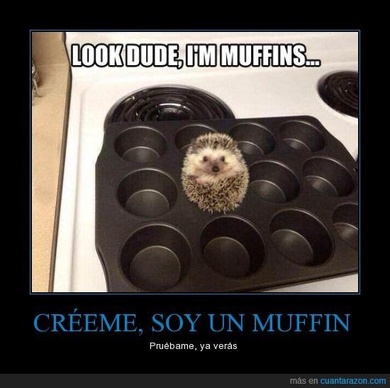 erizo,muffin,pinchos,probar