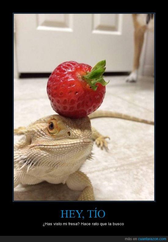 buscar,cabeza,encima,fresa,reptil,si alguien sabe el animal que lo diga