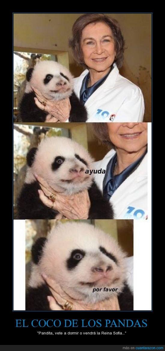 ahorcar,osicidio,oso,panda,Reina,sofia