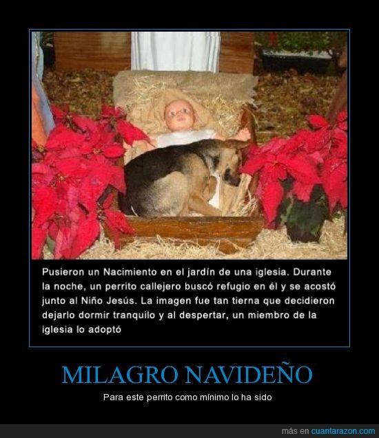 adoptar,amigo,amor,animal,callejero,dormir,estampa,hogar,iglesia,mascota,nacimiento,navidad,perro,refugio